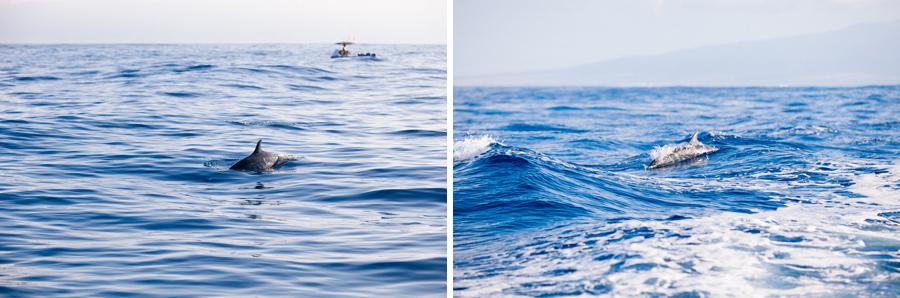 Hawaiian dolphins surfacing near boat