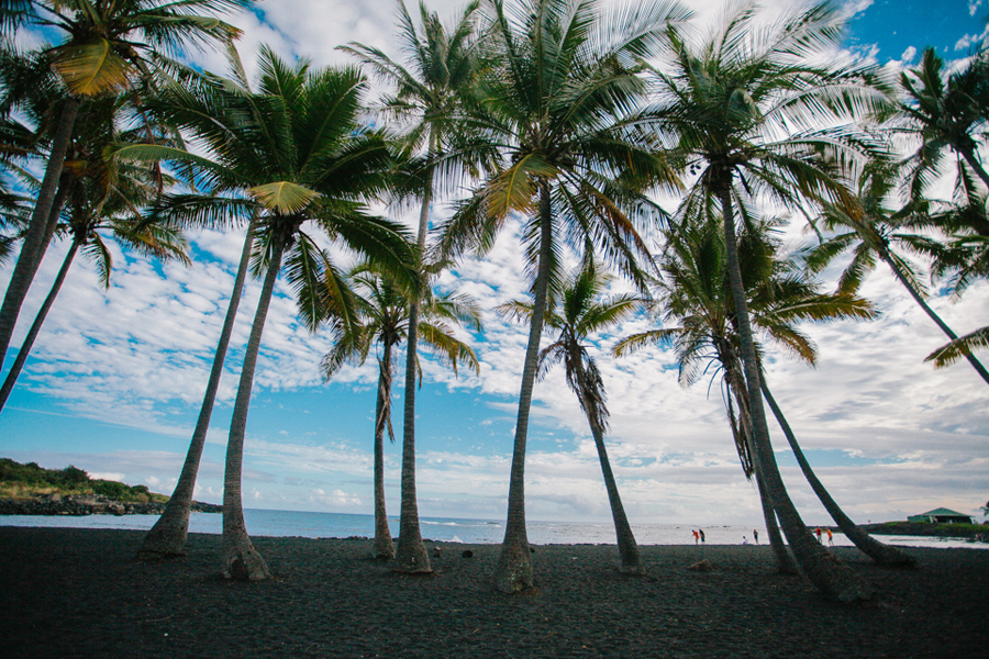 black sand beach with palm trees in Hawaii