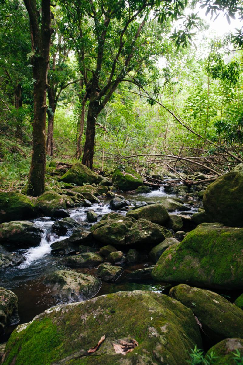 lush Hawaii creek