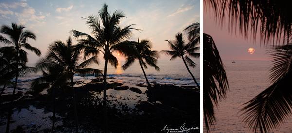 Big Island of Hawaii sunset palm trees
