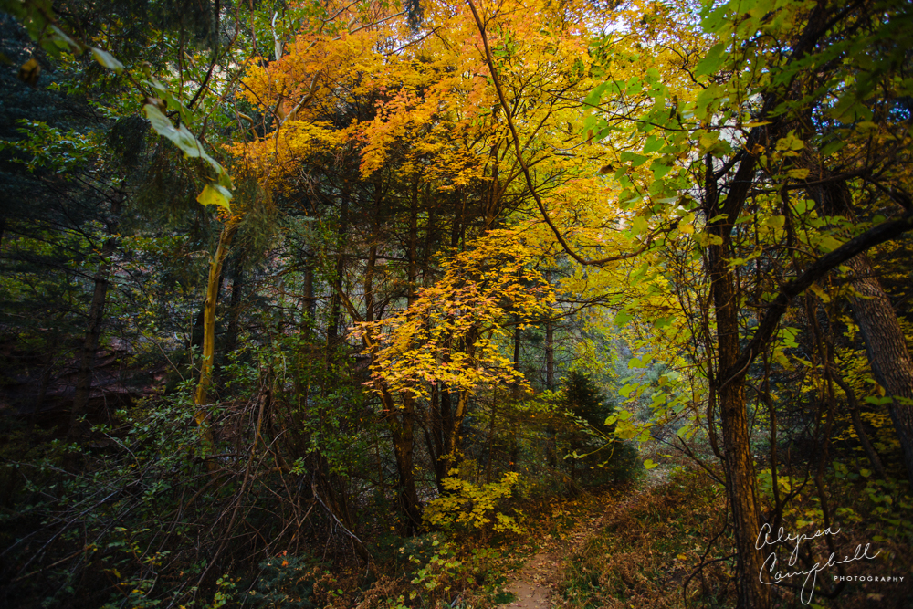 Sedona West Fork Trail fall colors