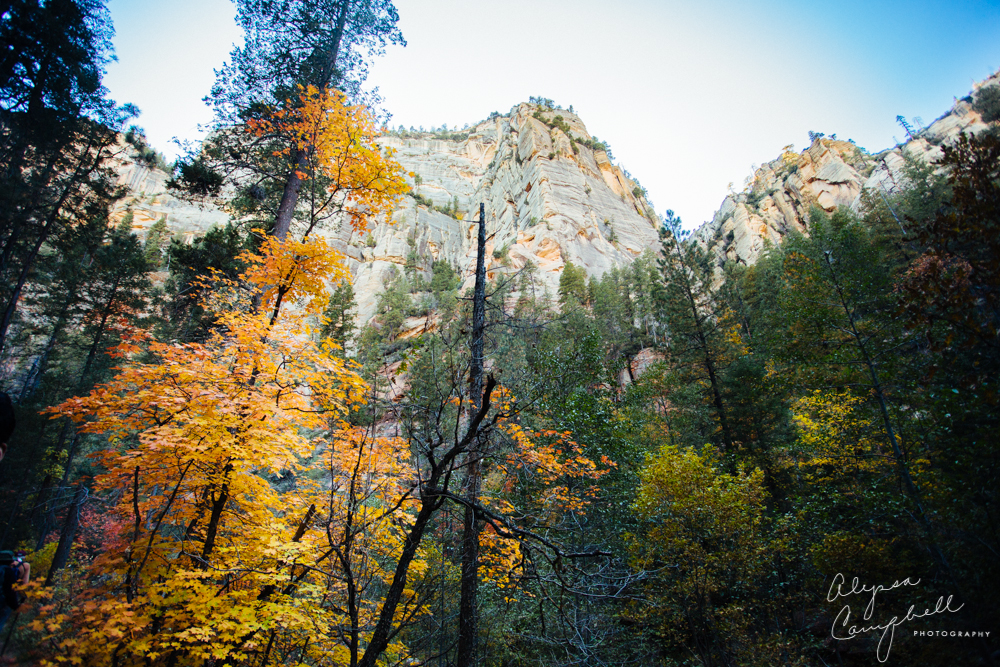Sedona West Fork Trail in fall