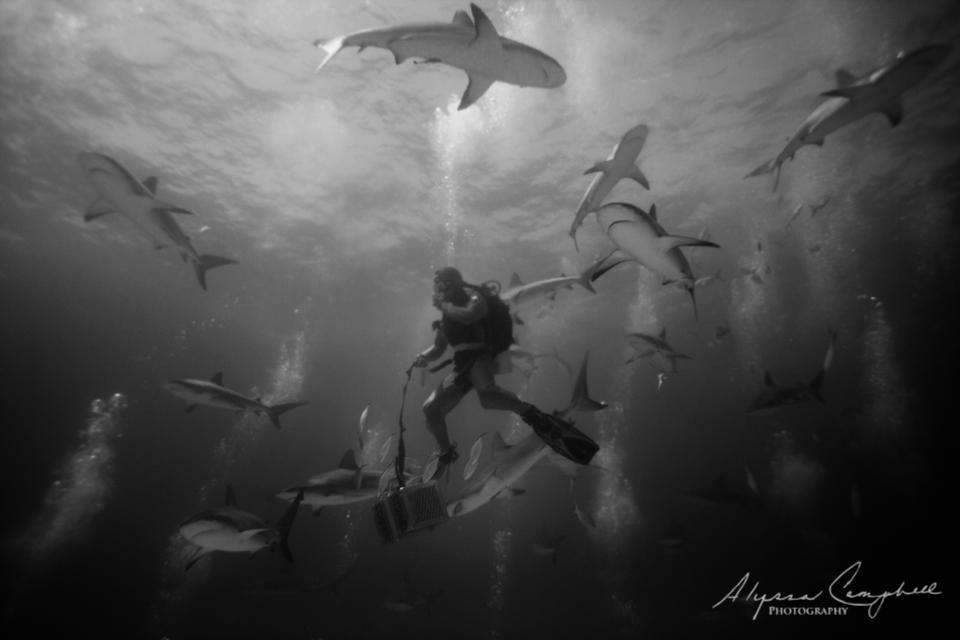 Stuarts Cove Bahamas divemaster feeding sharks