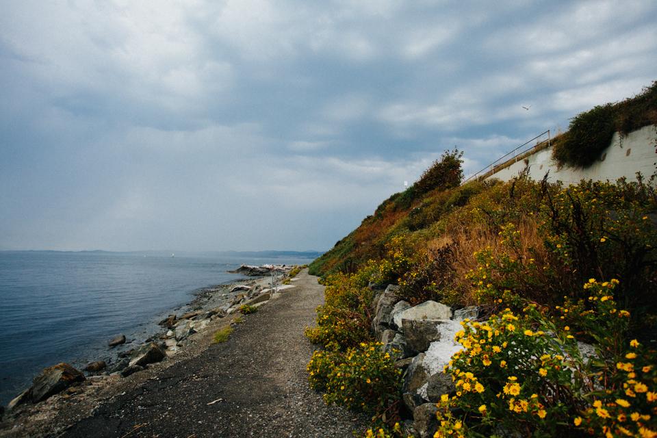 northwest coast shoreline victoria canada with yellow flowers