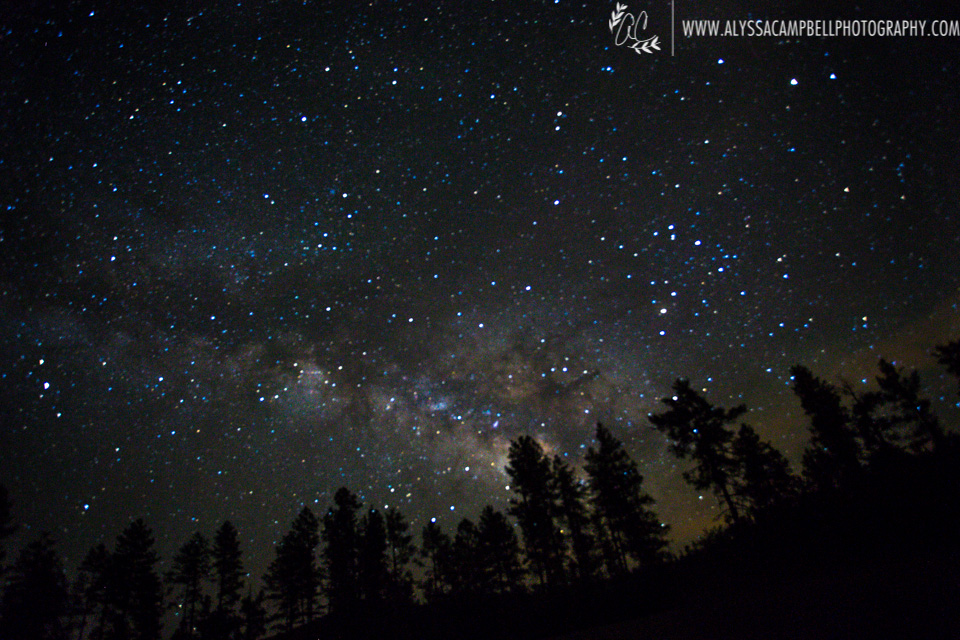 Milky Way over pine trees near Mogollon Rim, Arizona