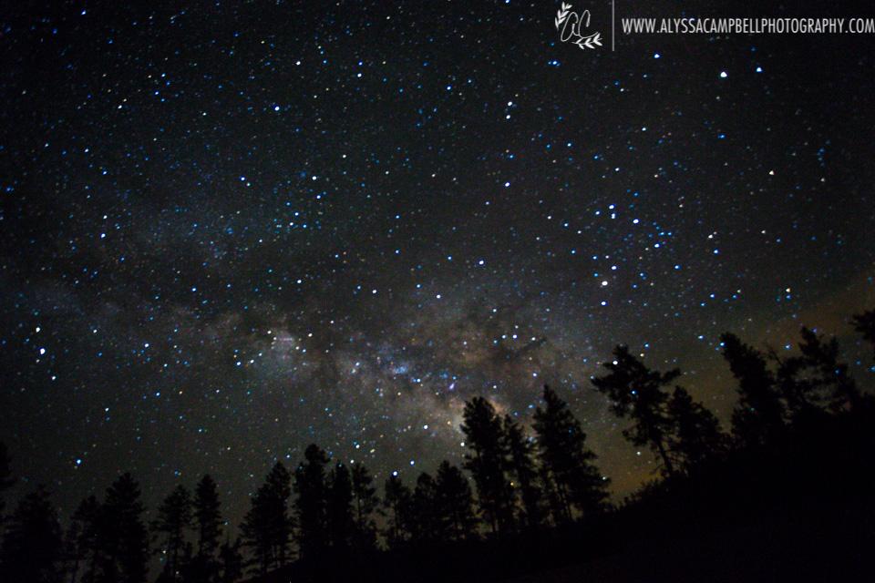 Milky Way over pine trees near Mogollon Rim, Arizona