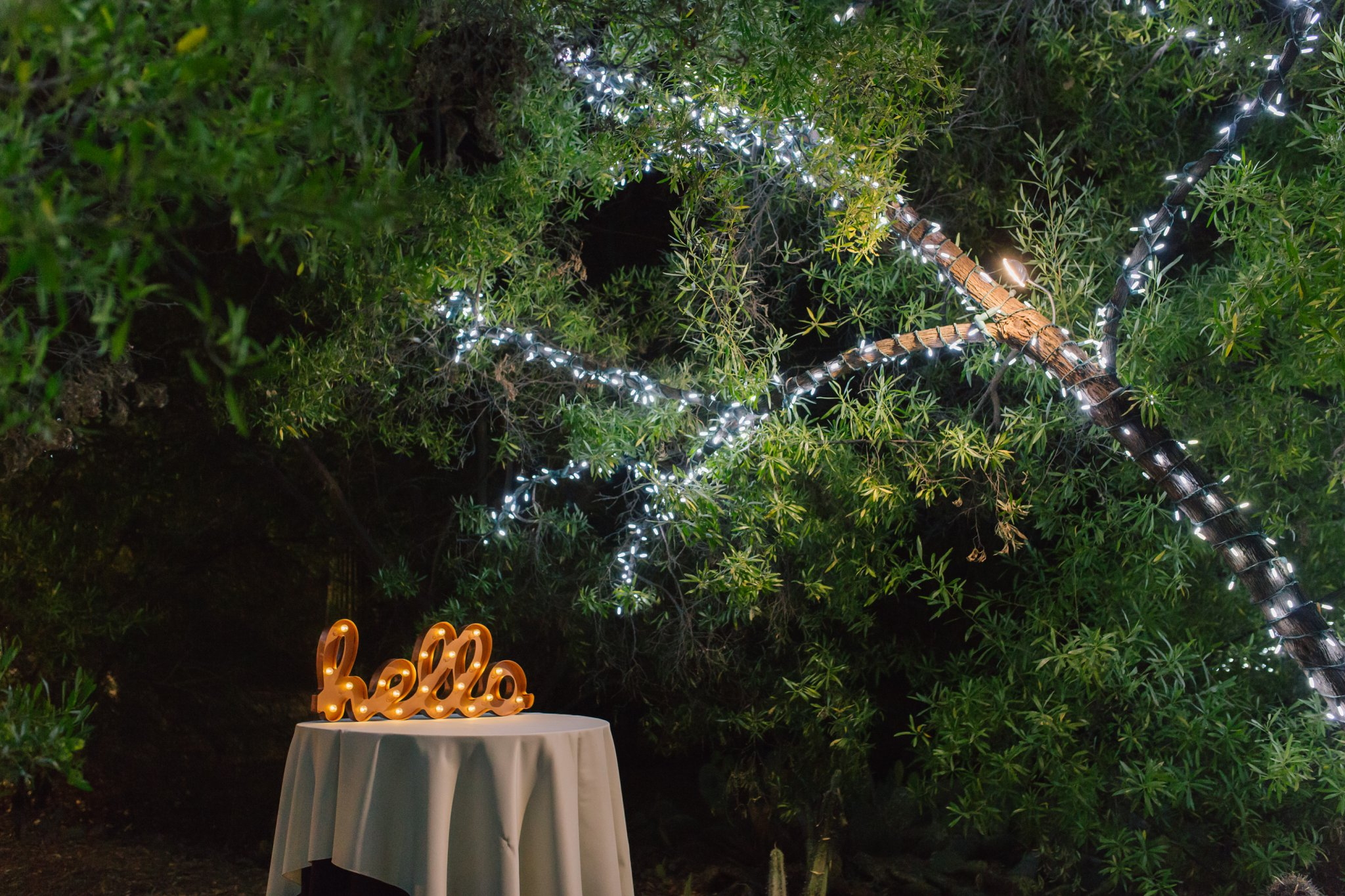 Phoenix Zoo outdoor wedding reception