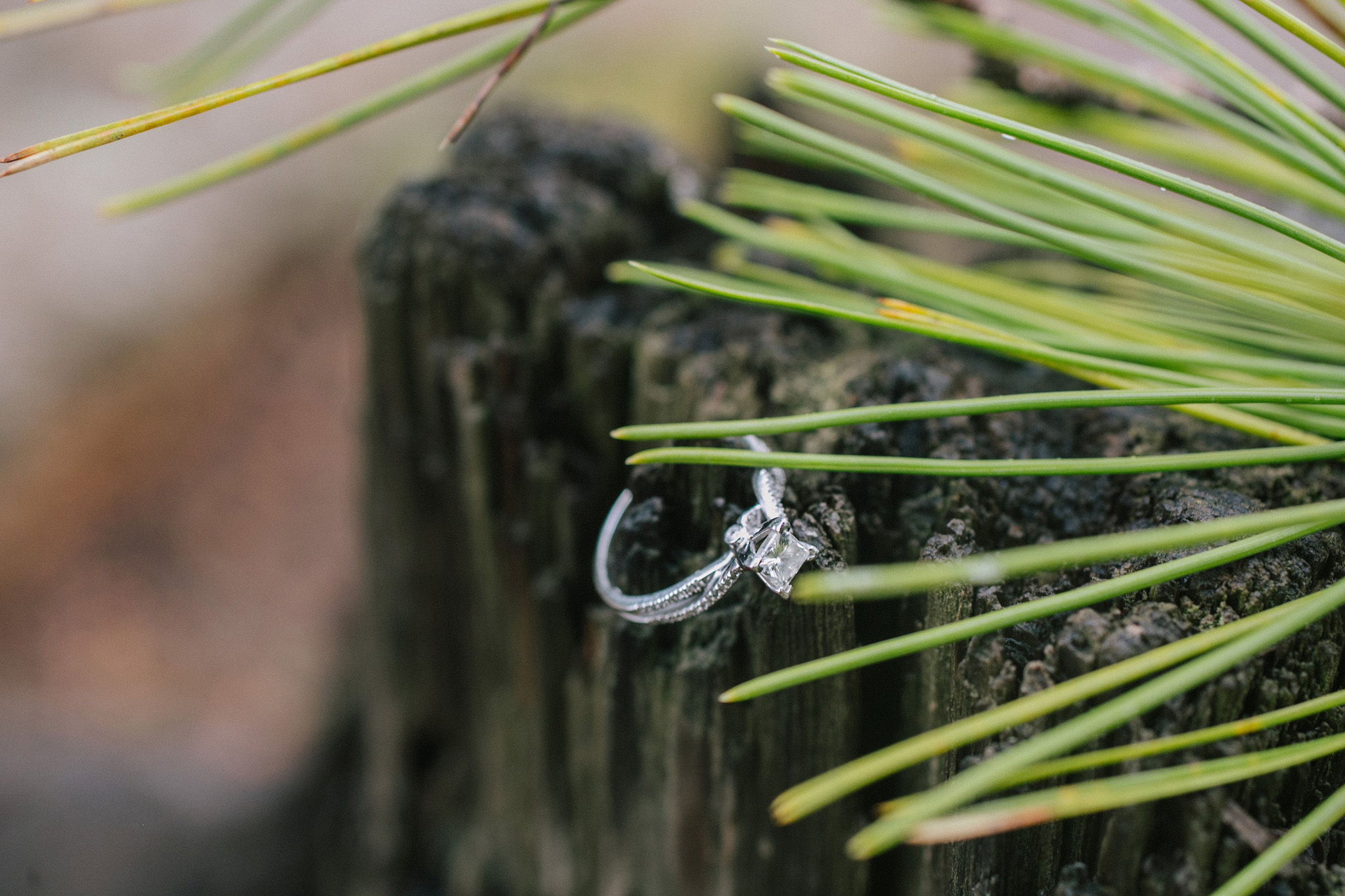 enorthern arizona forest engagement session