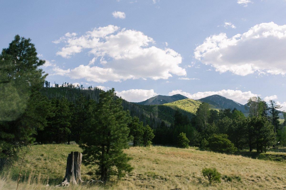 Lockett Meadow in summer