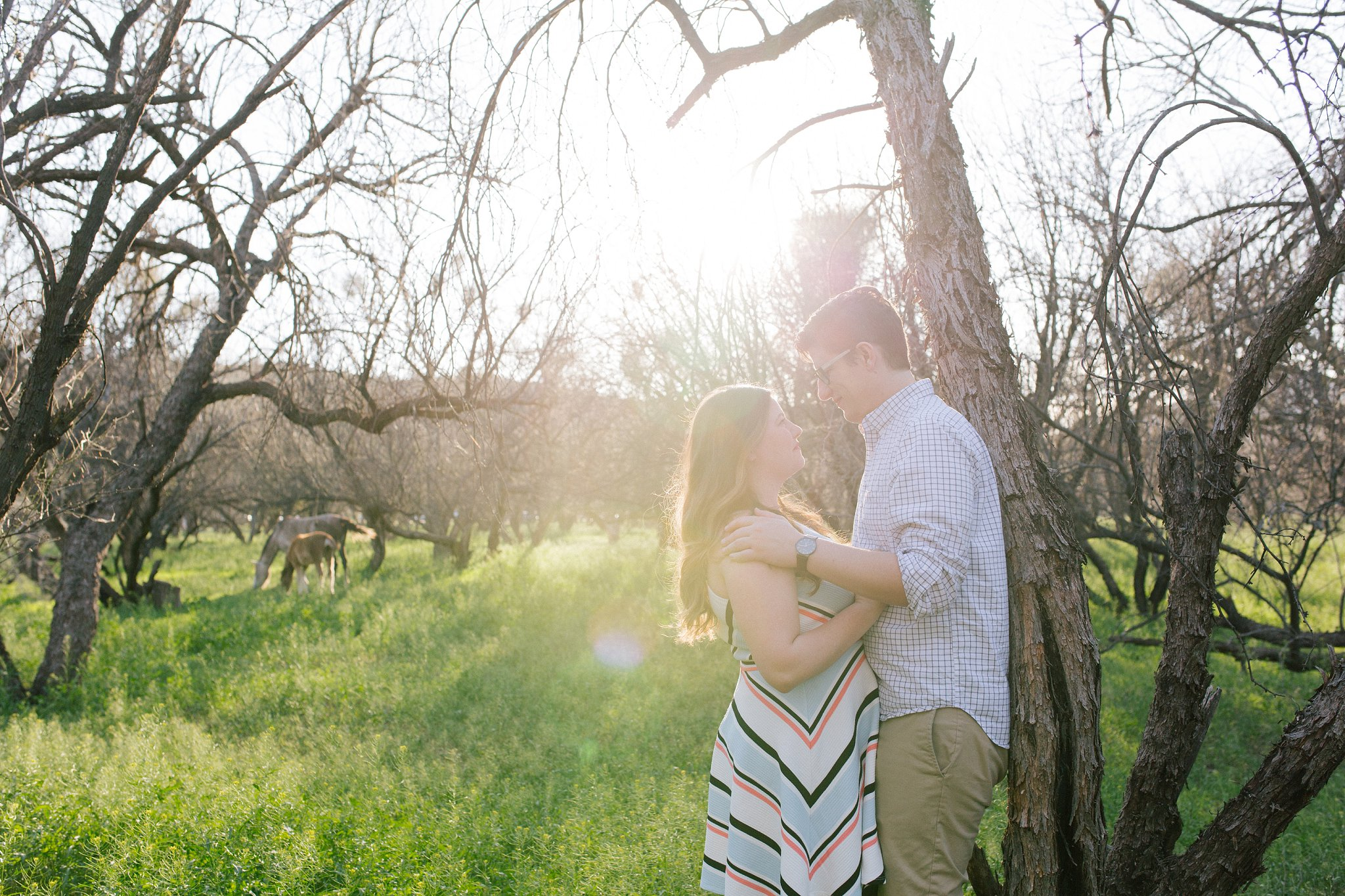 engagement session with wild horses in Mesa