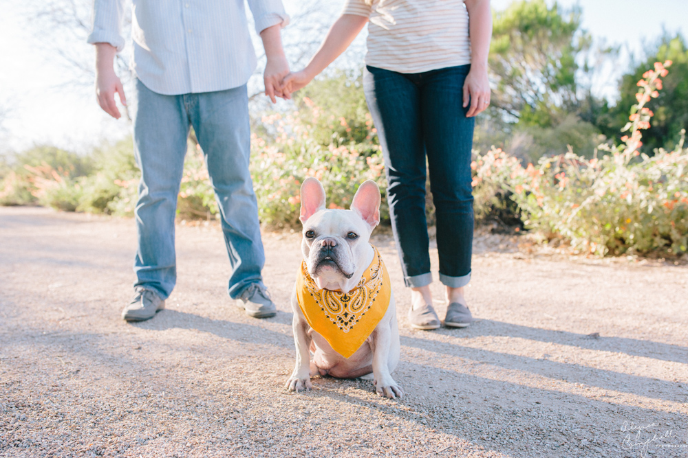 couple holding hands with French bulldog looking at camera
