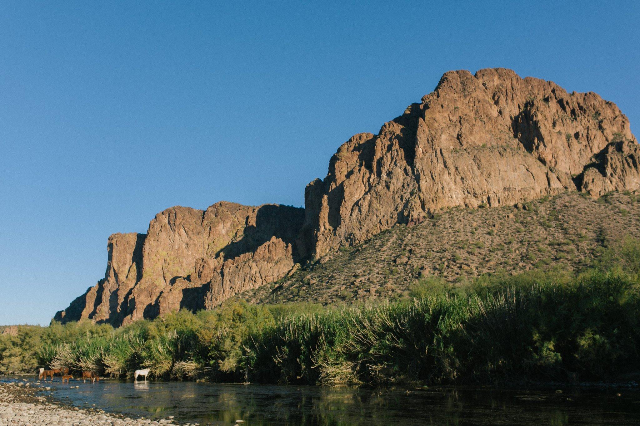 Mesa AZ Salt River horses