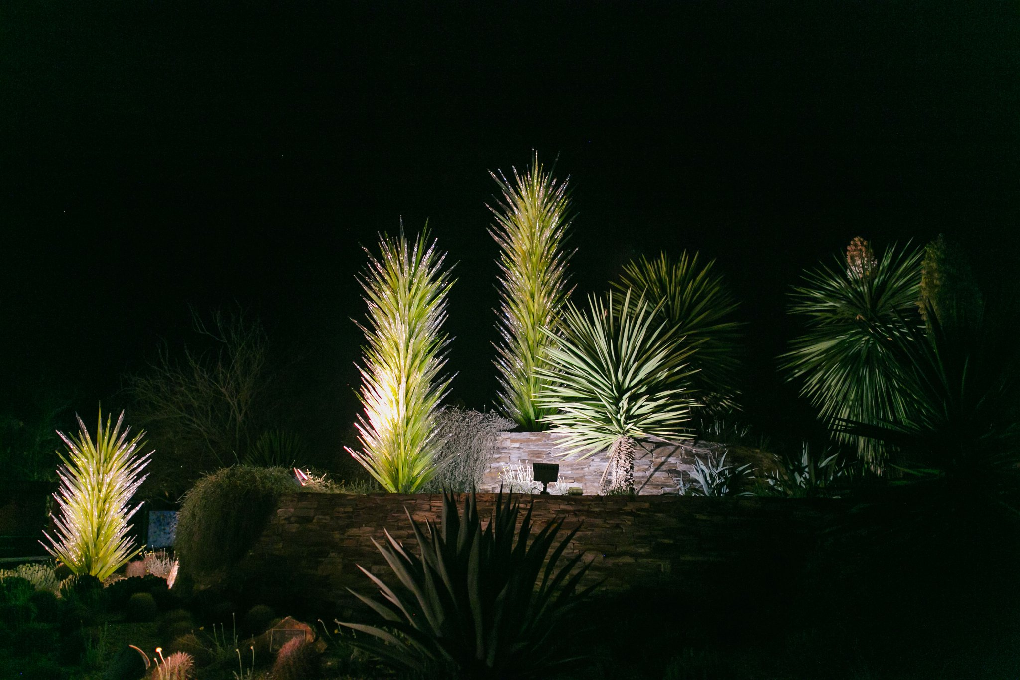 Desert Botanical Gardens chihuly at night