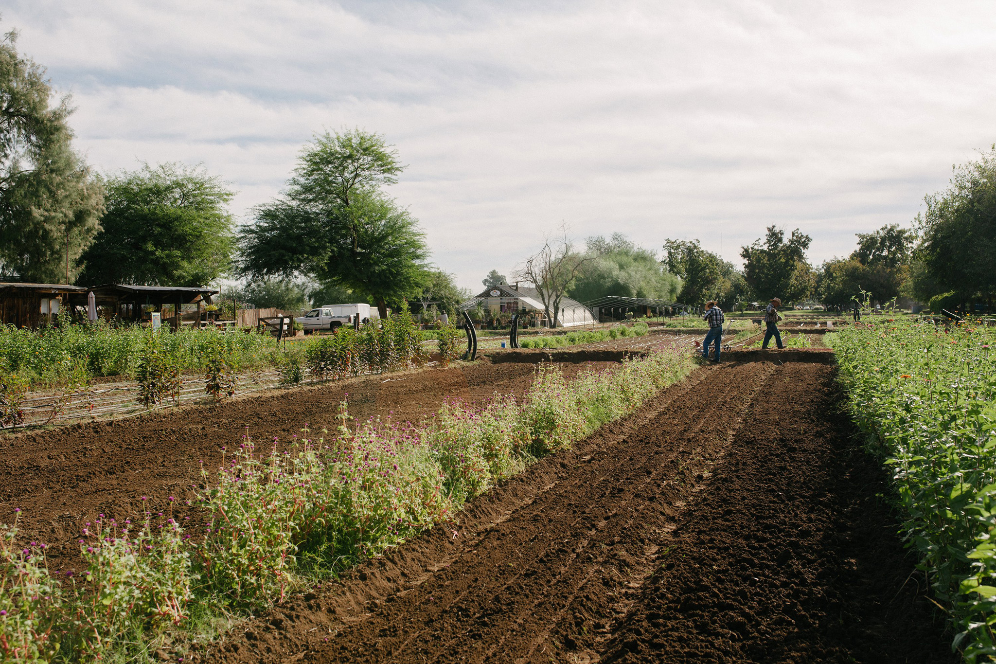 workers on the Farm at South mountain tending fields