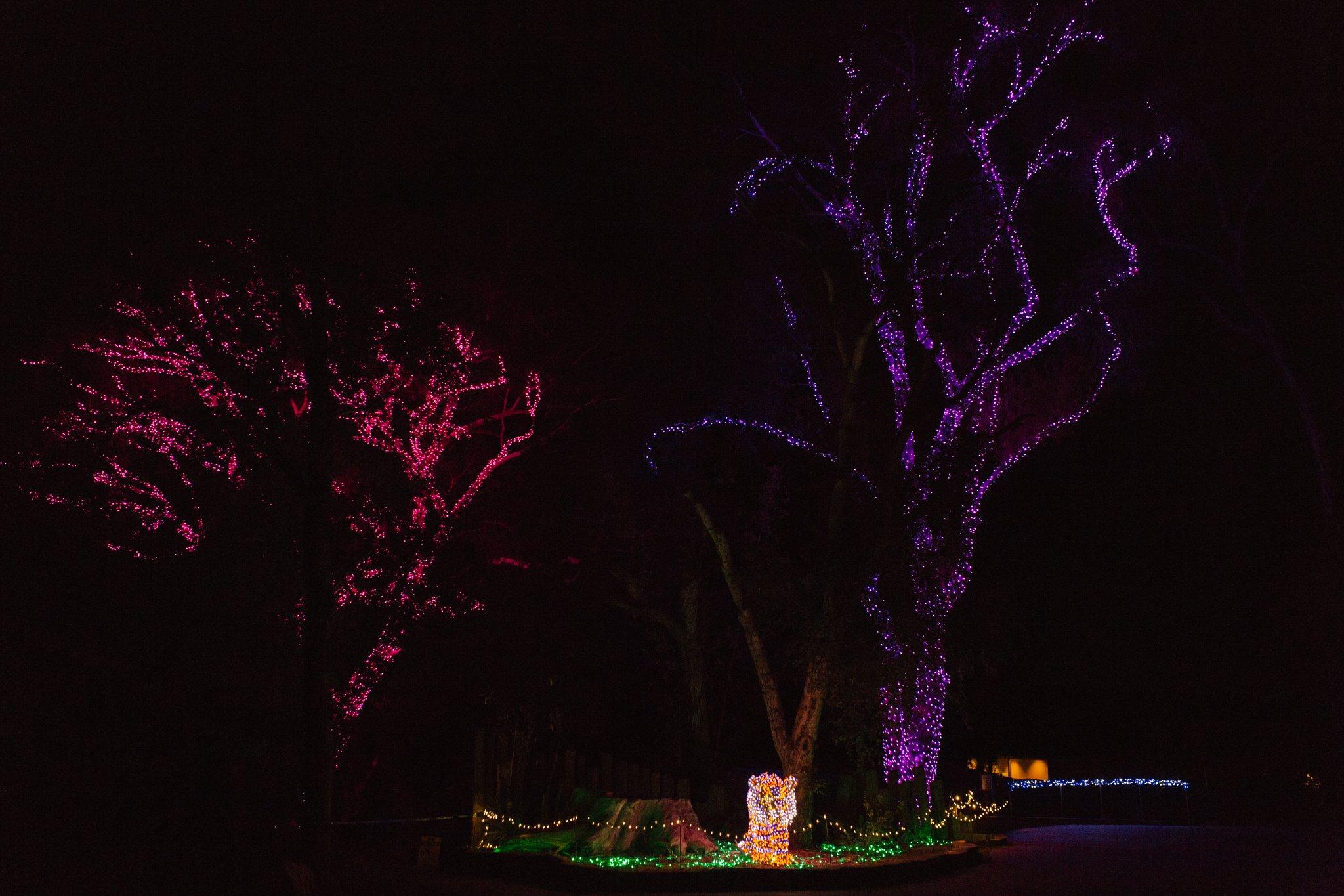 zoo lights at Phoenix Zoo wedding