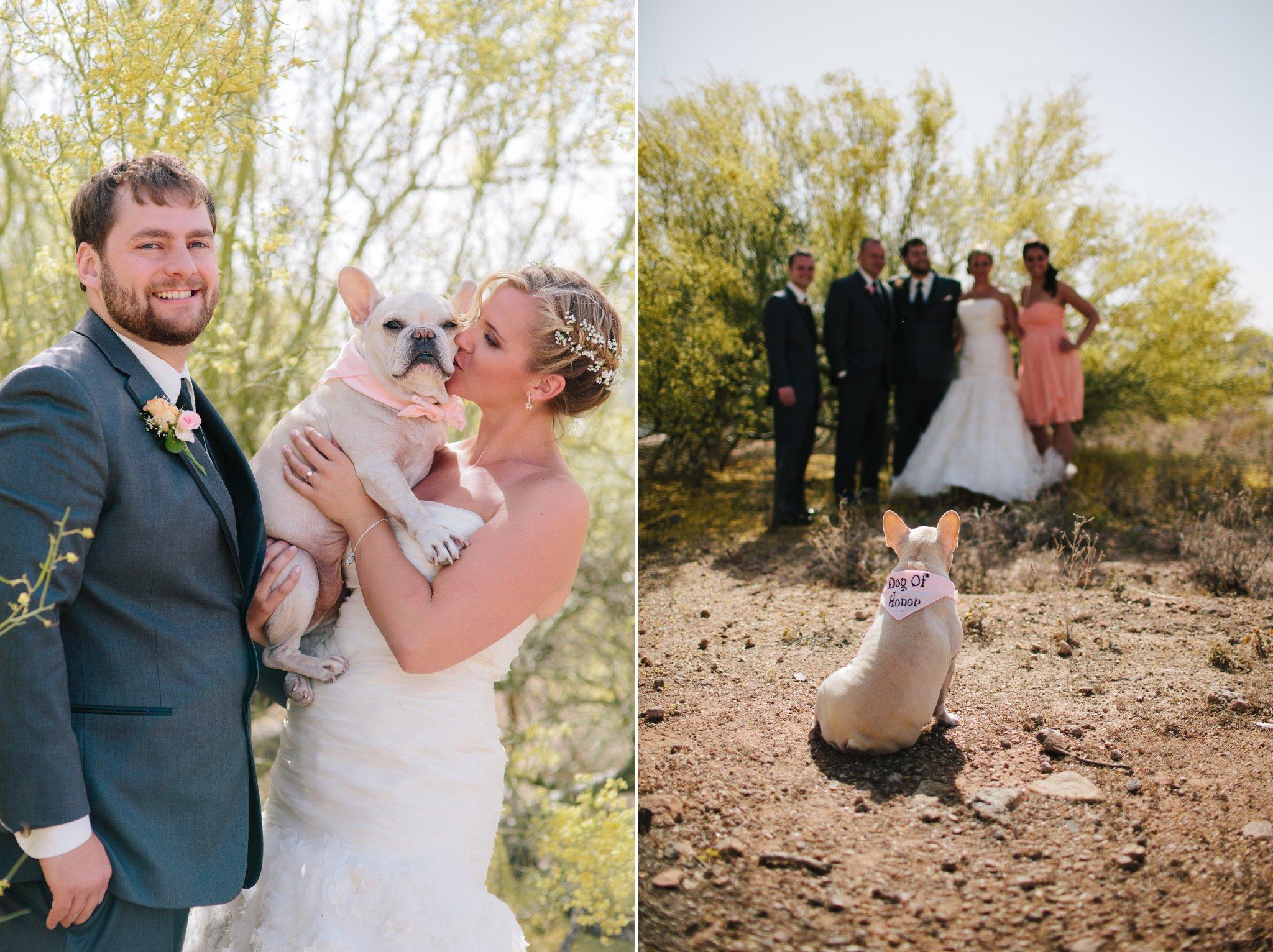 bulldog dog of honor looking at wedding party in Arizona desert