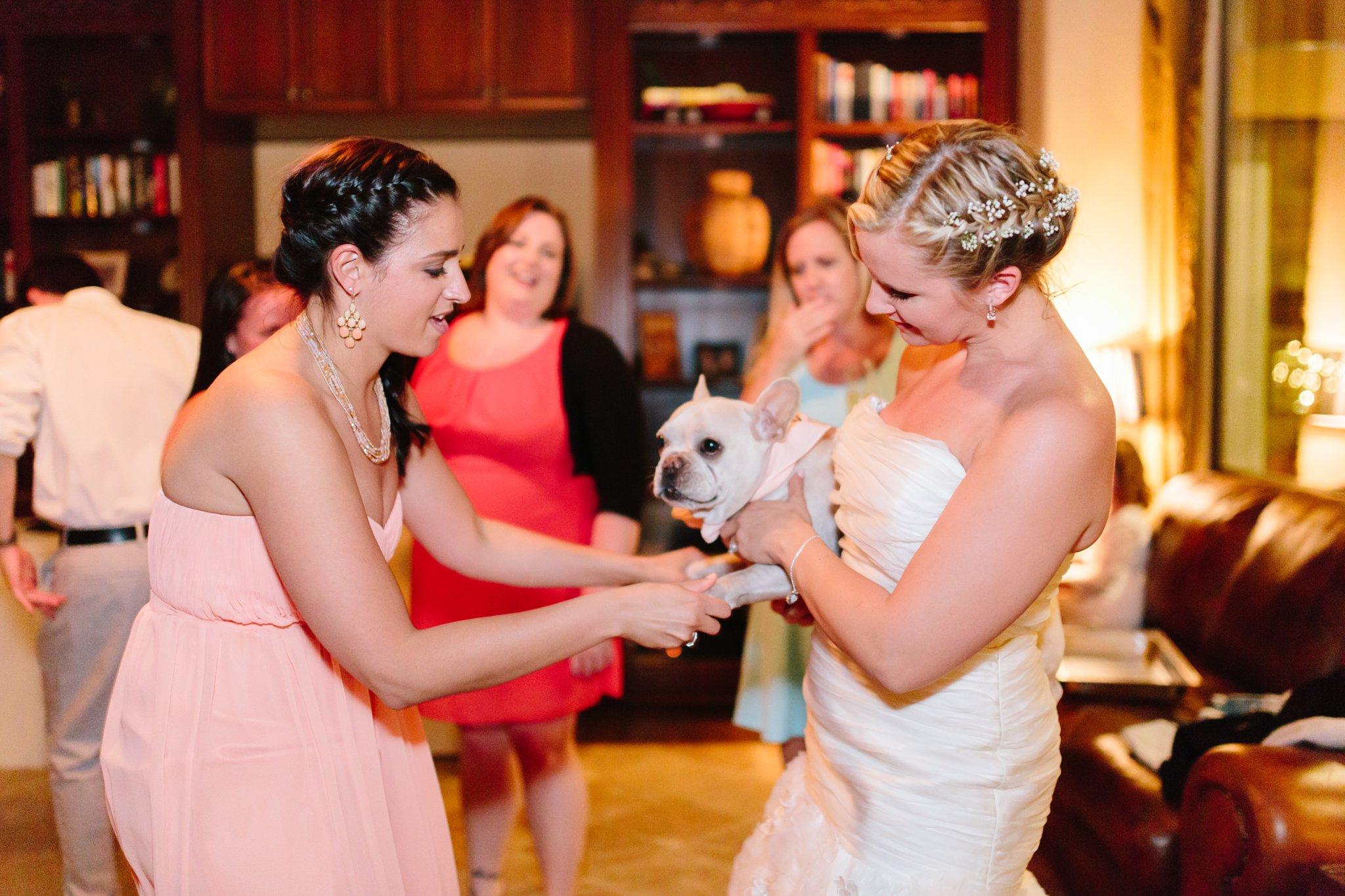 bride & maid of honor dancing with bulldog at Mesa AZ wedding inside home