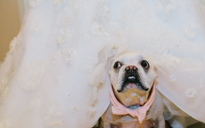Can I have my dog in my session or wedding? Phoenix Lifestyle Photographer