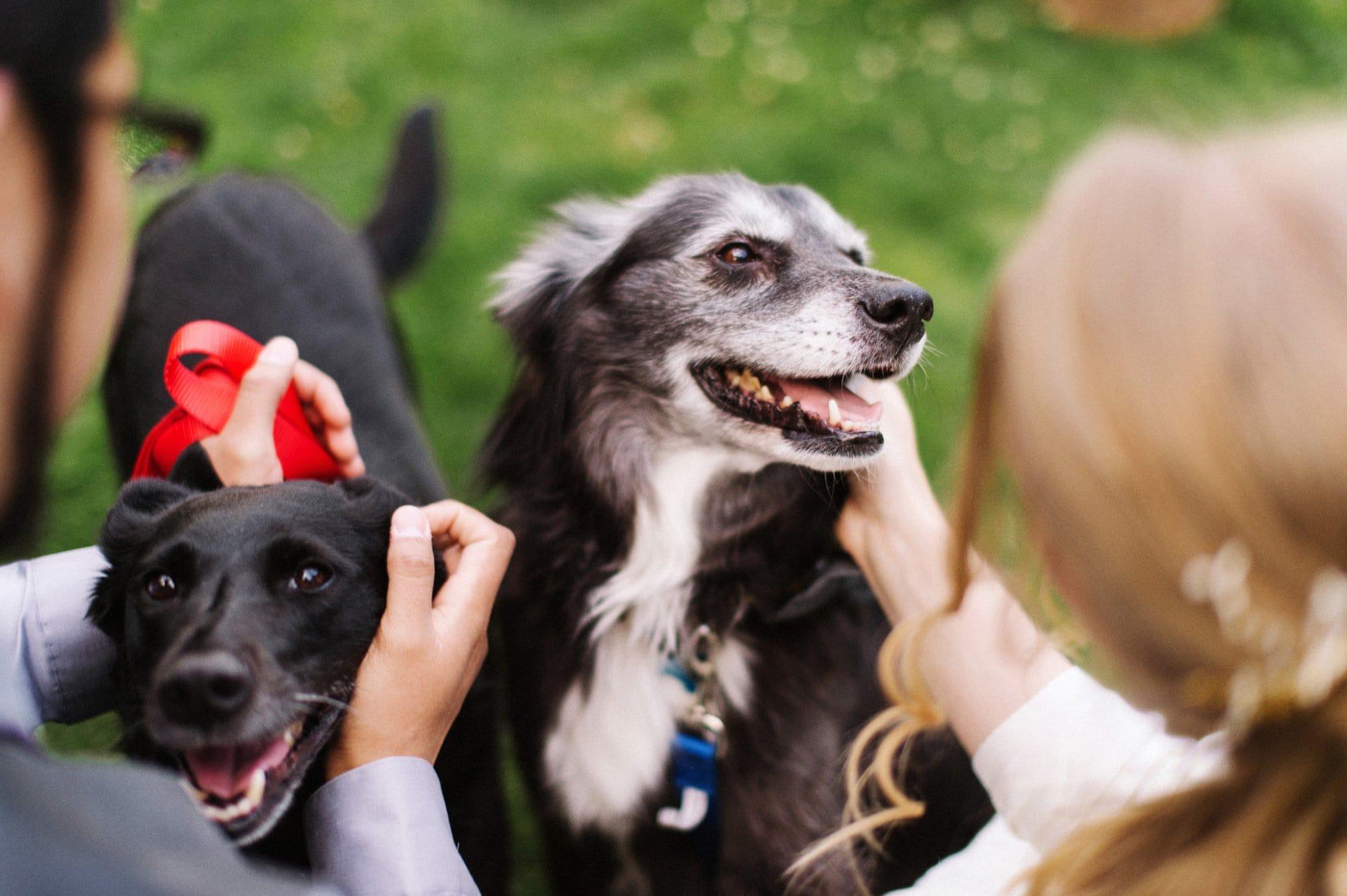 dogs at wedding summer camp Arizona