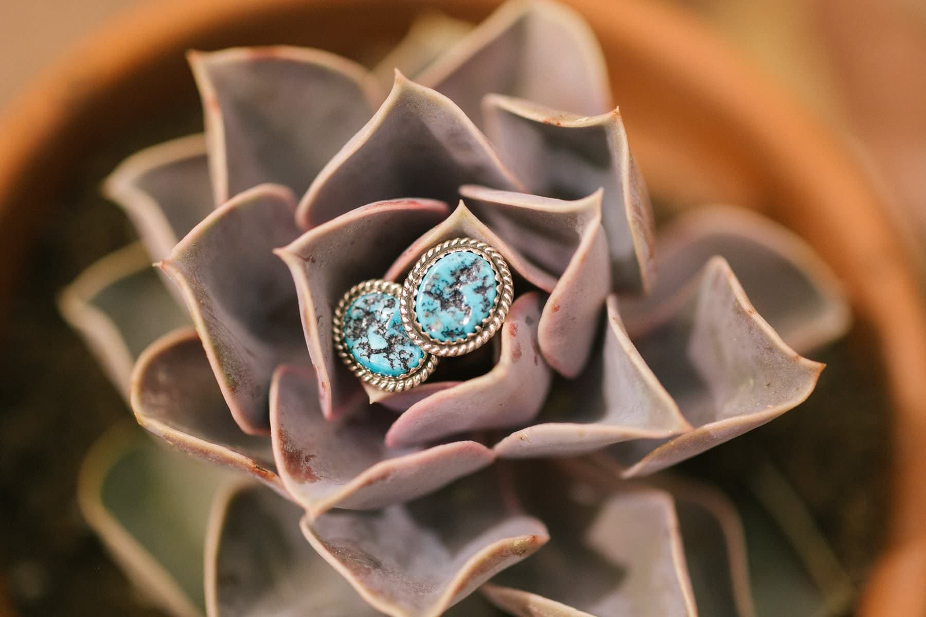 turquoise earrings on succulent