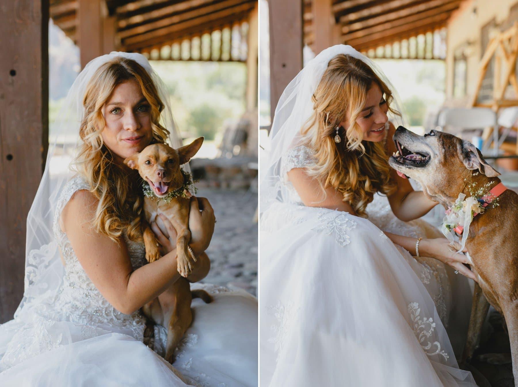 bride with dogs Saguaro Lake Ranch wedding
