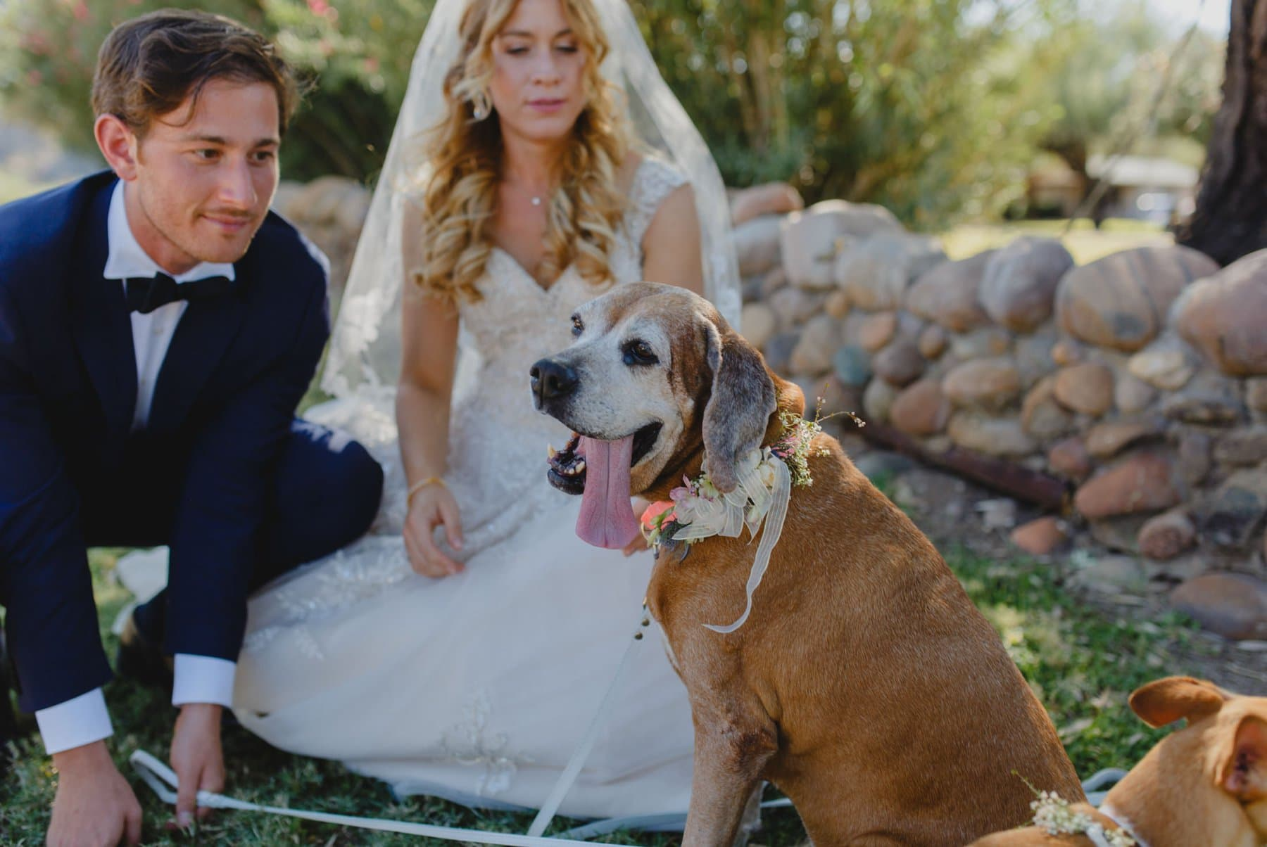 dogs in wedding photos Saguaro Lake Ranch wedding Arizona