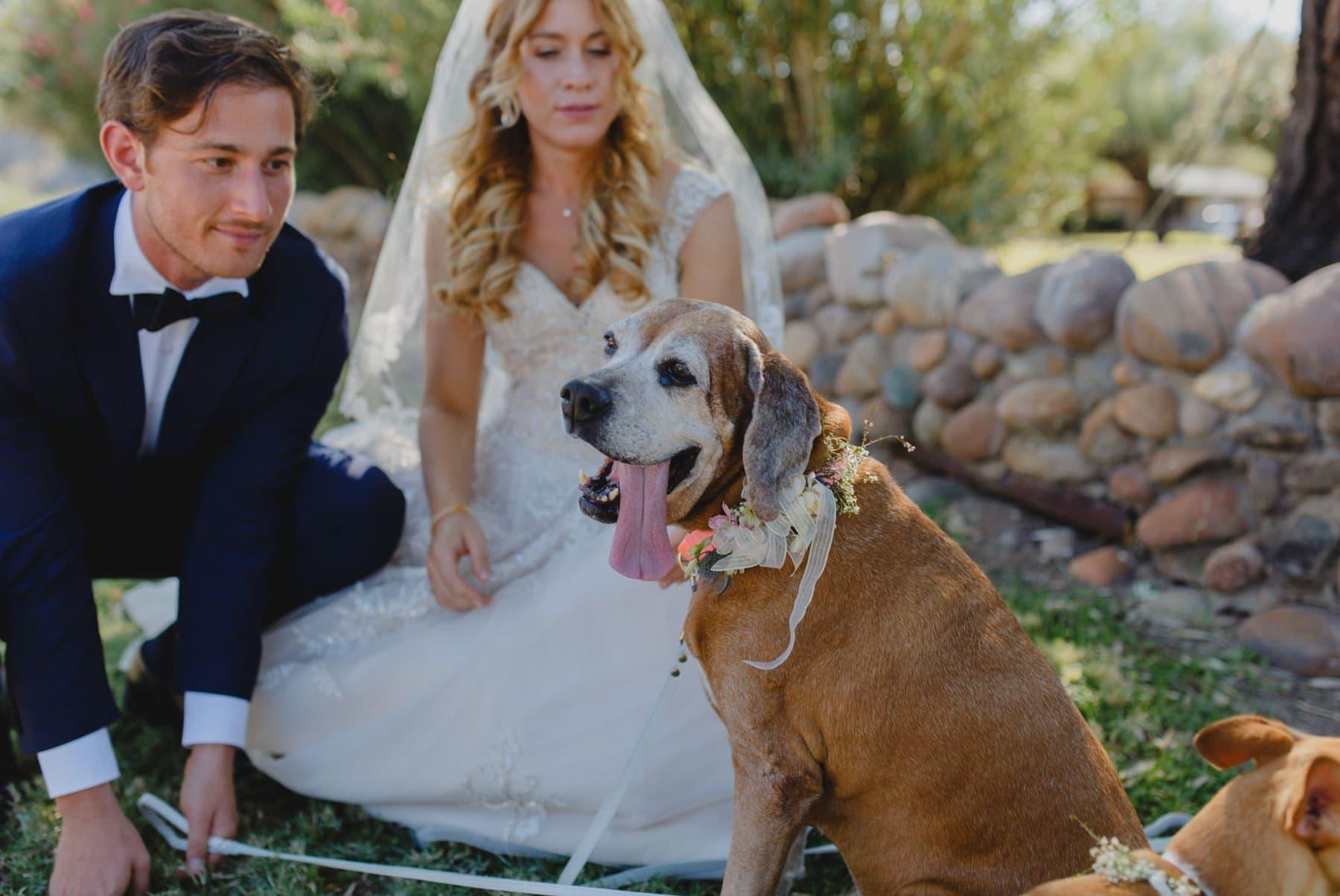 dogs in wedding photos Saguaro Lake Ranch wedding Arizona