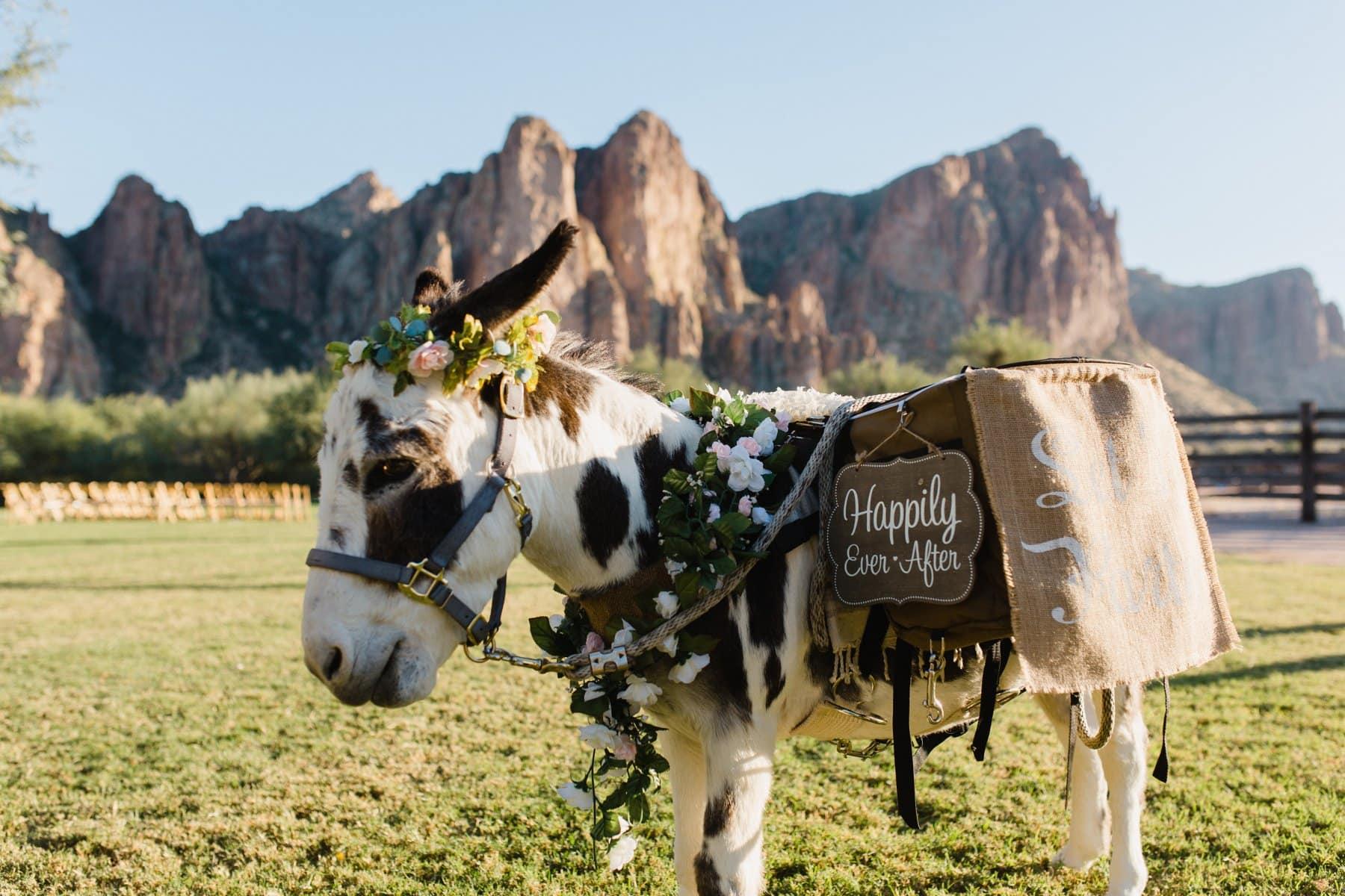 wedding beer burro at Saguaro Lake Ranch