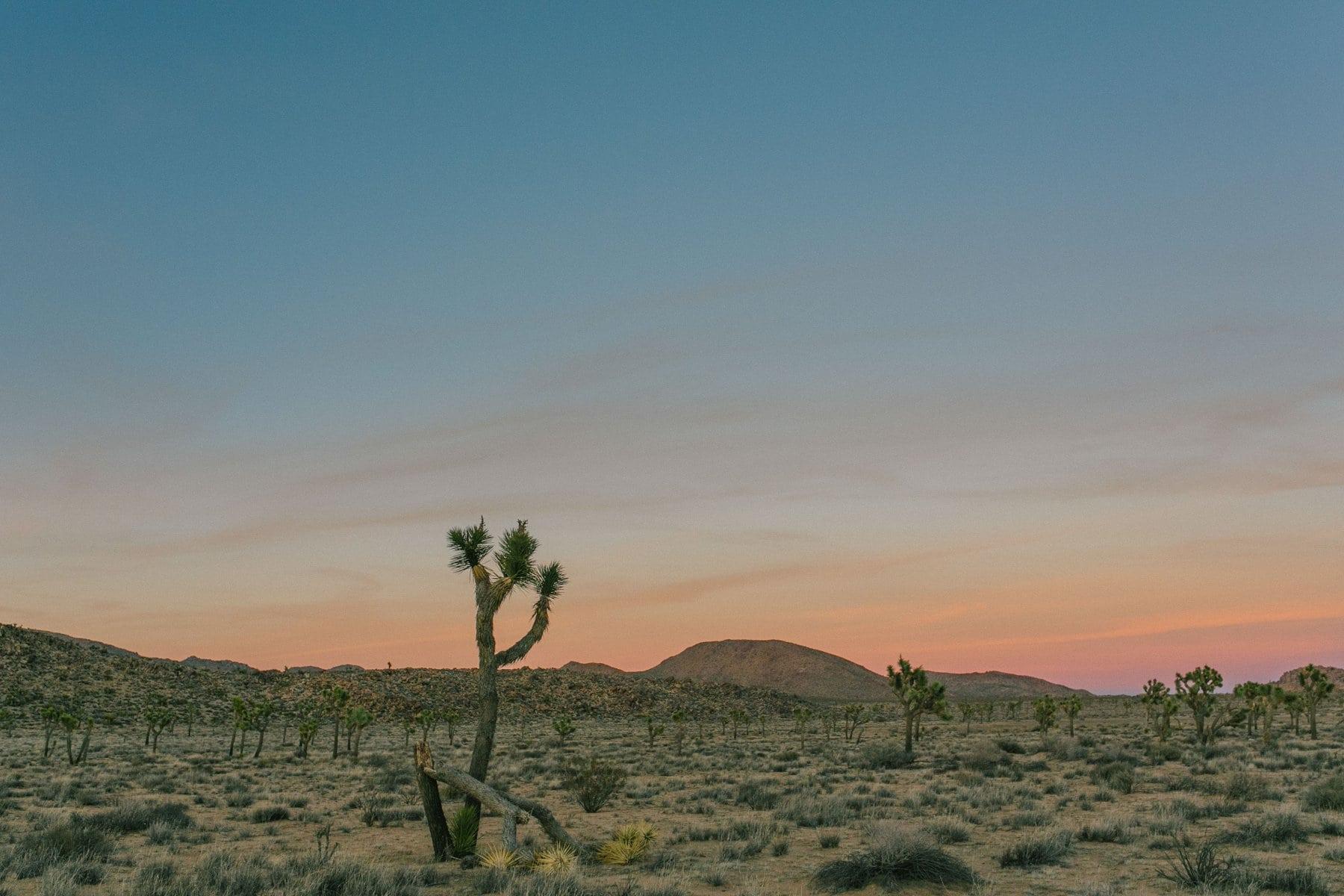 Joshua Tree sunset destination travel portrait & wedding photographer in Arizona