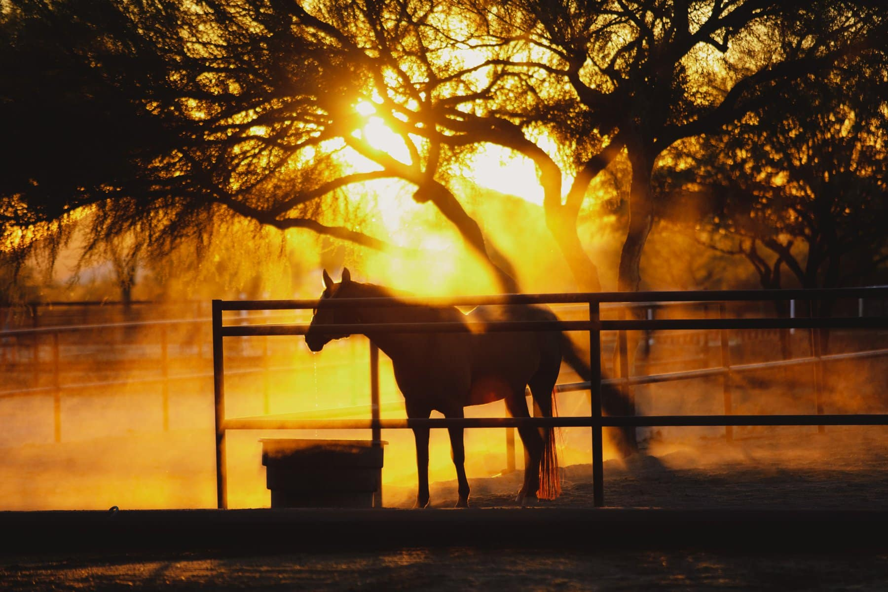 horse drinking water in dusty Arizona sunset light