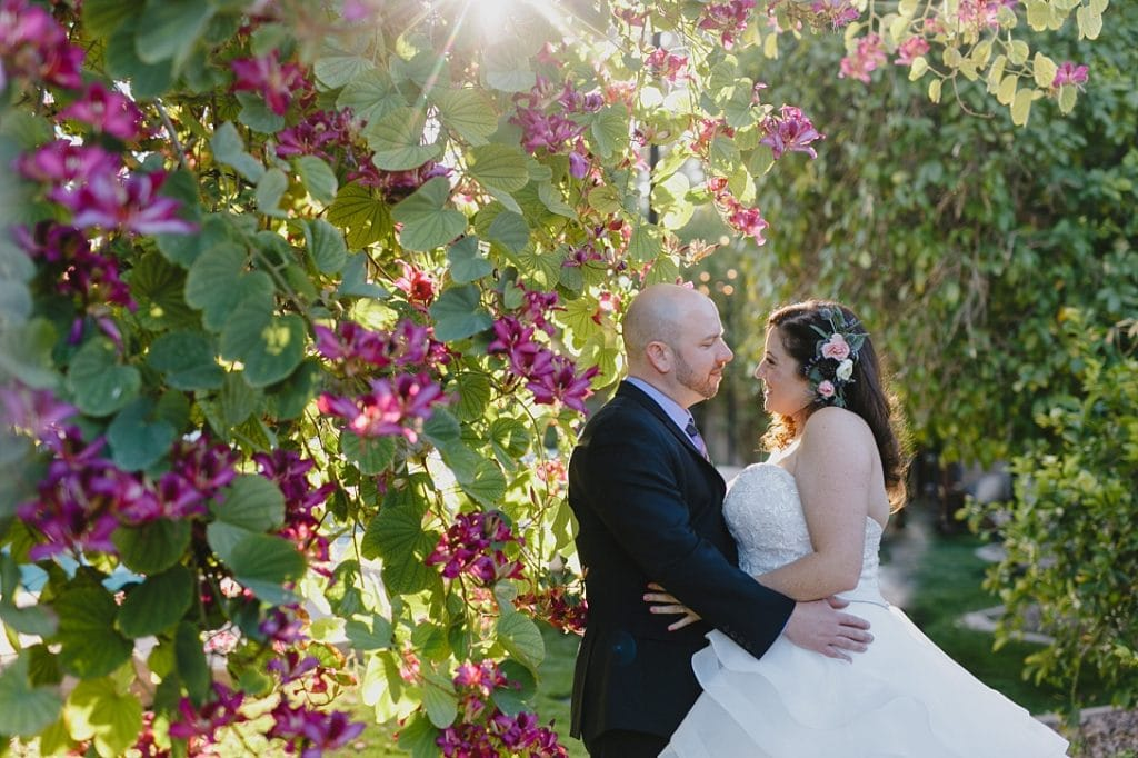 backyard wedding in Tempe AZ bride and groom in front of hong kong orchid tree in bloom